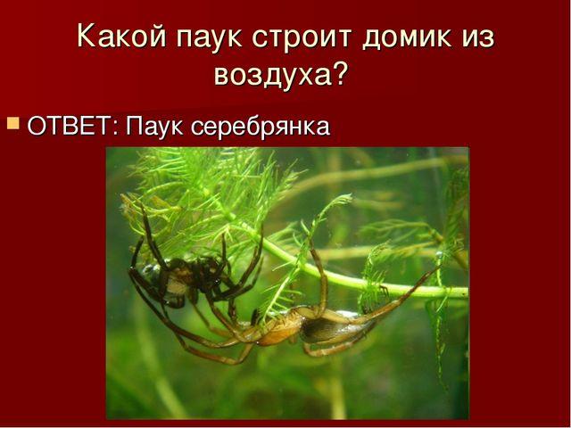 Какой паук строит домик из воздуха? ОТВЕТ: Паук серебрянка