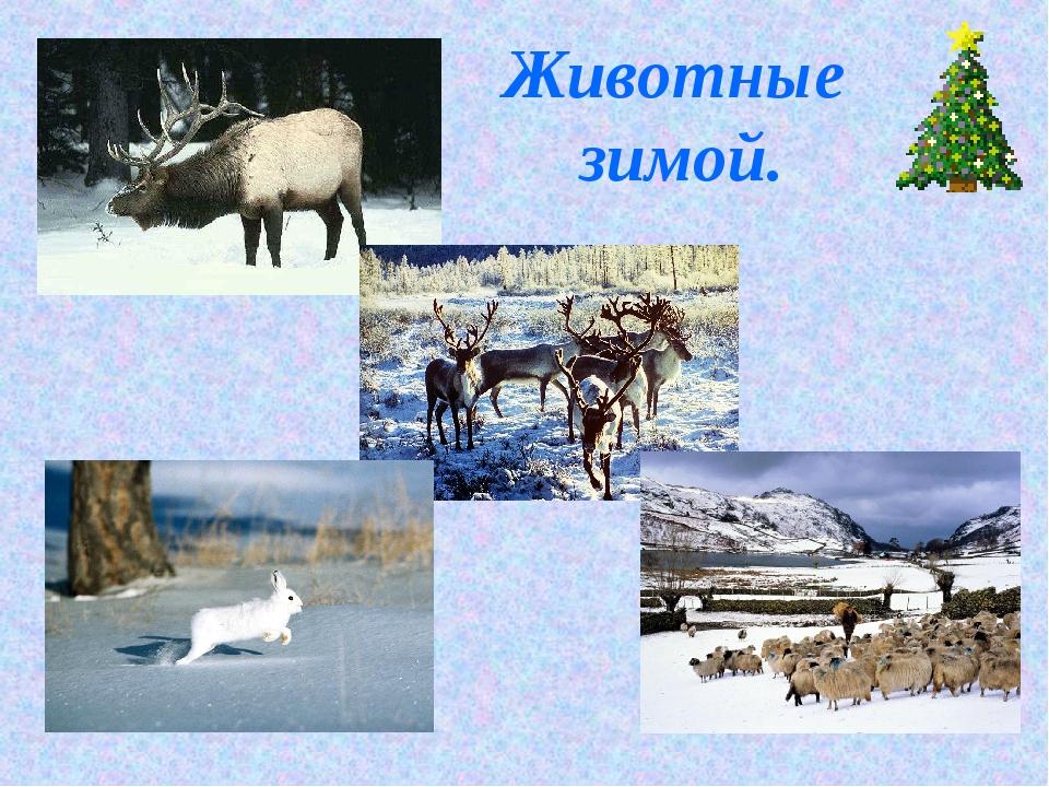 Животные зимой.