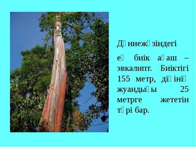 Дүниежүзіндегі ең биік ағаш – эвкалипт. Биіктігі 155 метр, діңінің жуандығы...