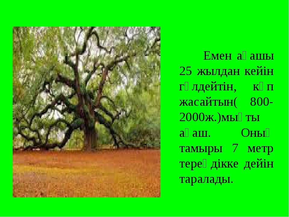 Емен ағашы 25 жылдан кейін гүлдейтін, көп жасайтын( 800-2000ж.)мықты ағаш. О...