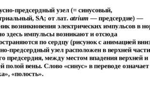 1)синусно-предсердный узел(= синусовый, синоатриальный,SA; от лат.atrium