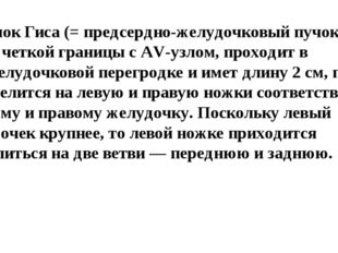 3)Пучок Гиса(= предсердно-желудочковый пучок) не имеет четкой границы с AV-