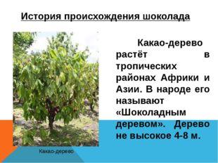 История происхождения шоколада Какао-дерево растёт в тропических районах Аф
