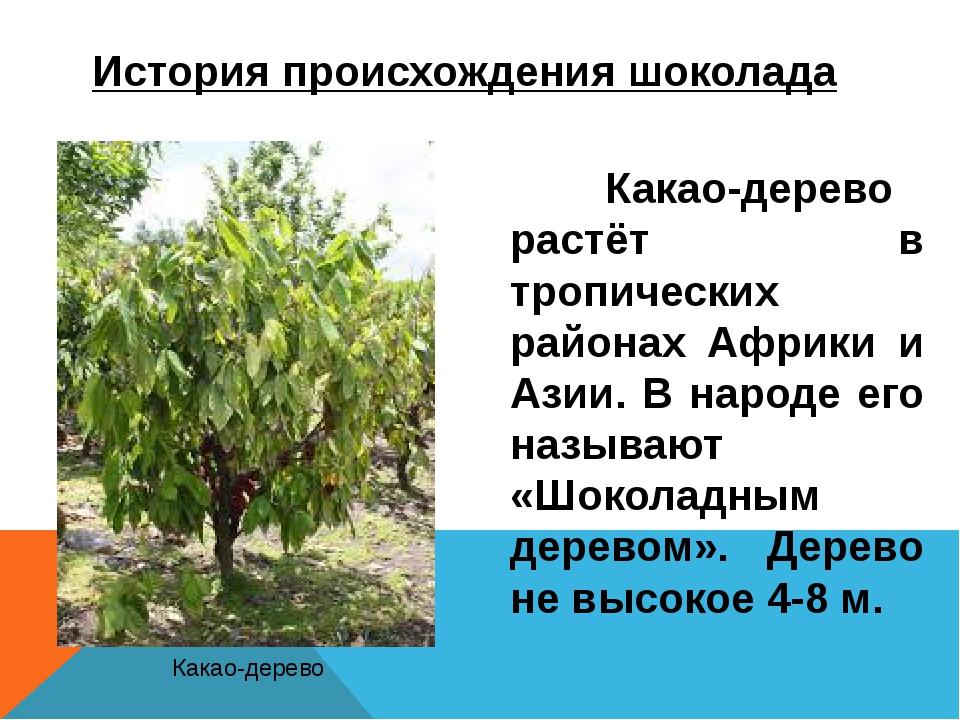 История происхождения шоколада Какао-дерево растёт в тропических районах Аф...