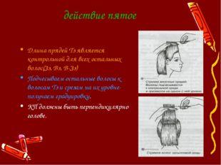 действие пятое Длина прядей Тз является контрольной для всех остальных волос(