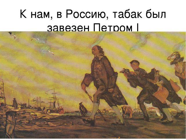 К нам, в Россию, табак был завезен Петром I