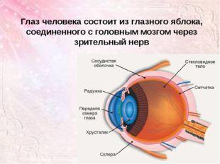 Глаз человека состоит из глазного яблока, соединенного с головным мозгом чере
