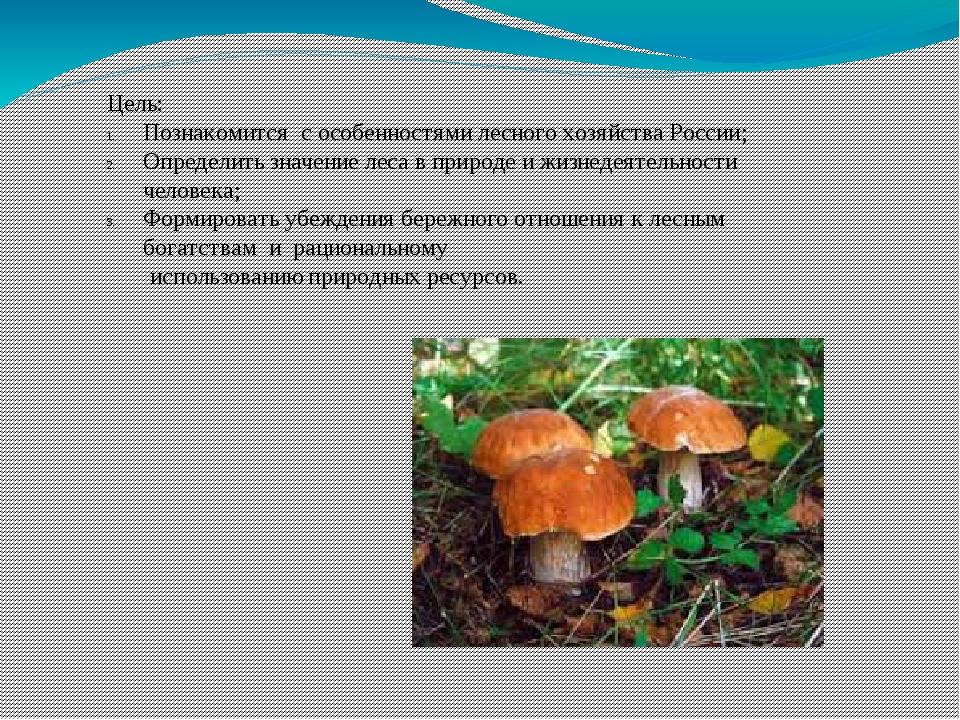 Цель: Познакомится с особенностями лесного хозяйства России; Определить значе...
