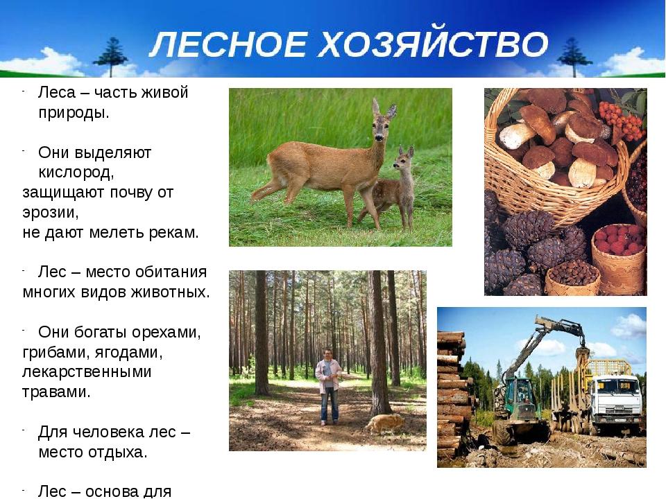 Леса – часть живой природы. Они выделяют кислород, защищают почву от эрозии,...