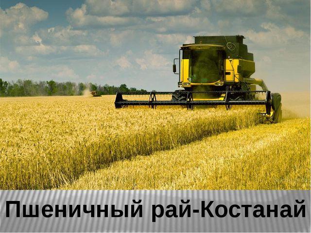 Пшеничный рай-Костанай