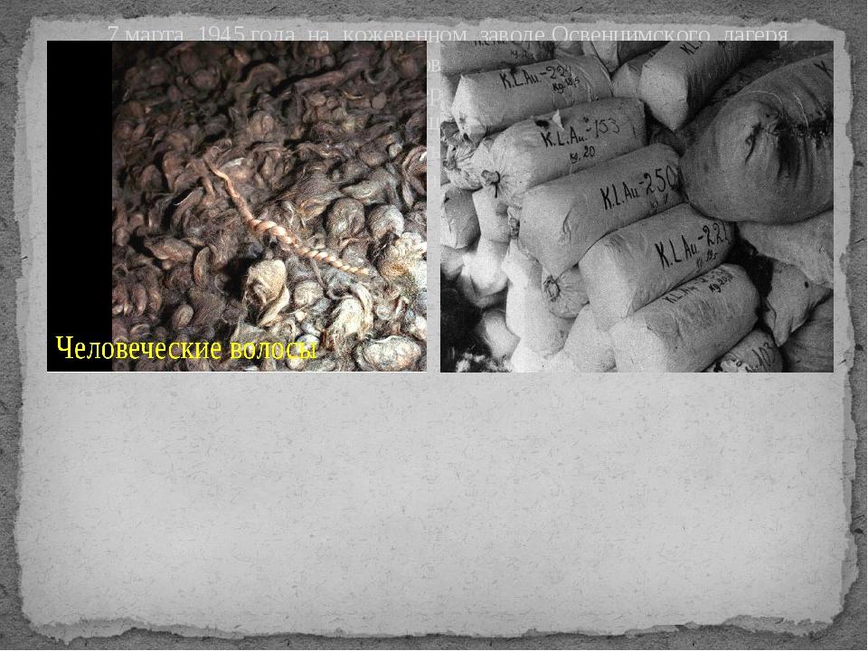 7 марта 1945 года на кожевенном заводе Освенцимского лагеря были обнаружены...