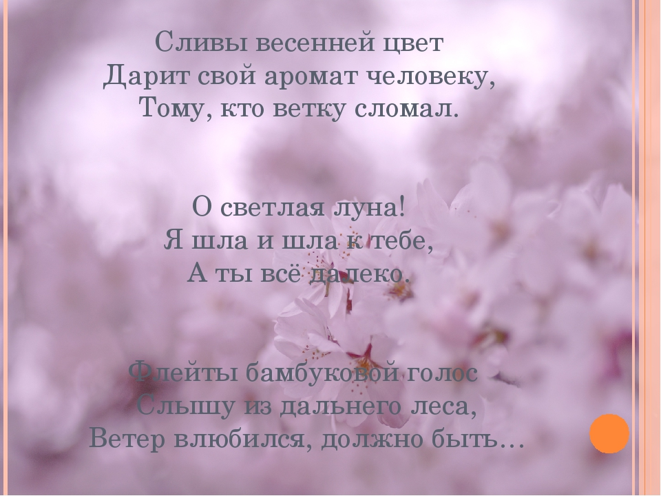 Сливы весенней цвет Дарит свой аромат человеку, Тому, кто ветку сломал. О све...