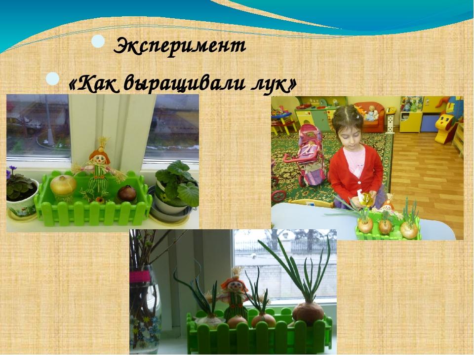 Эксперимент «Как выращивали лук»