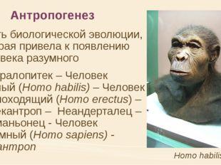 Антропогенез часть биологической эволюции, которая привела к появлению челов