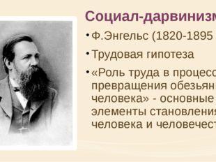 Социал-дарвинизм Ф.Энгельс (1820-1895 гг.) Трудовая гипотеза «Роль труда в пр