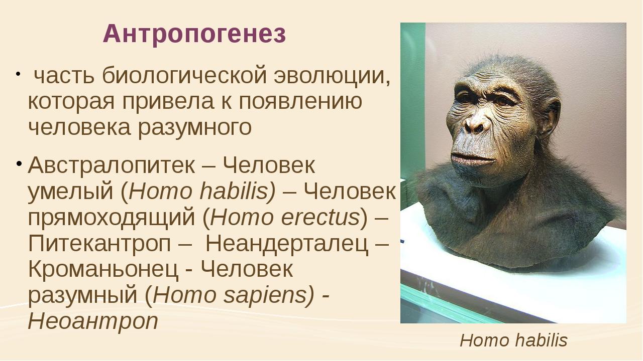 Антропогенез часть биологической эволюции, которая привела к появлению челов...