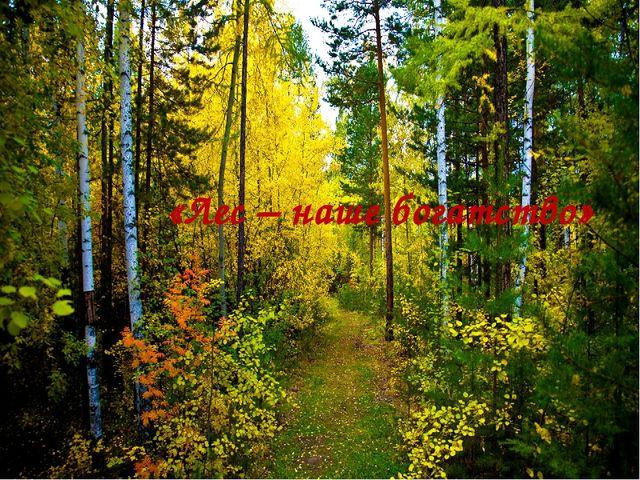 «Лес – наше богатство»