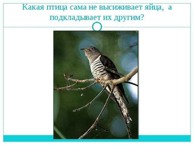 Какая птица сама не высиживает яйца, а подкладывает их другим?