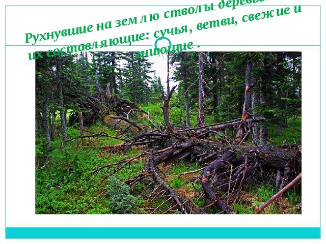 Рухнувшие на землю стволы деревьев или их составляющие: сучья, ветви, свежие...