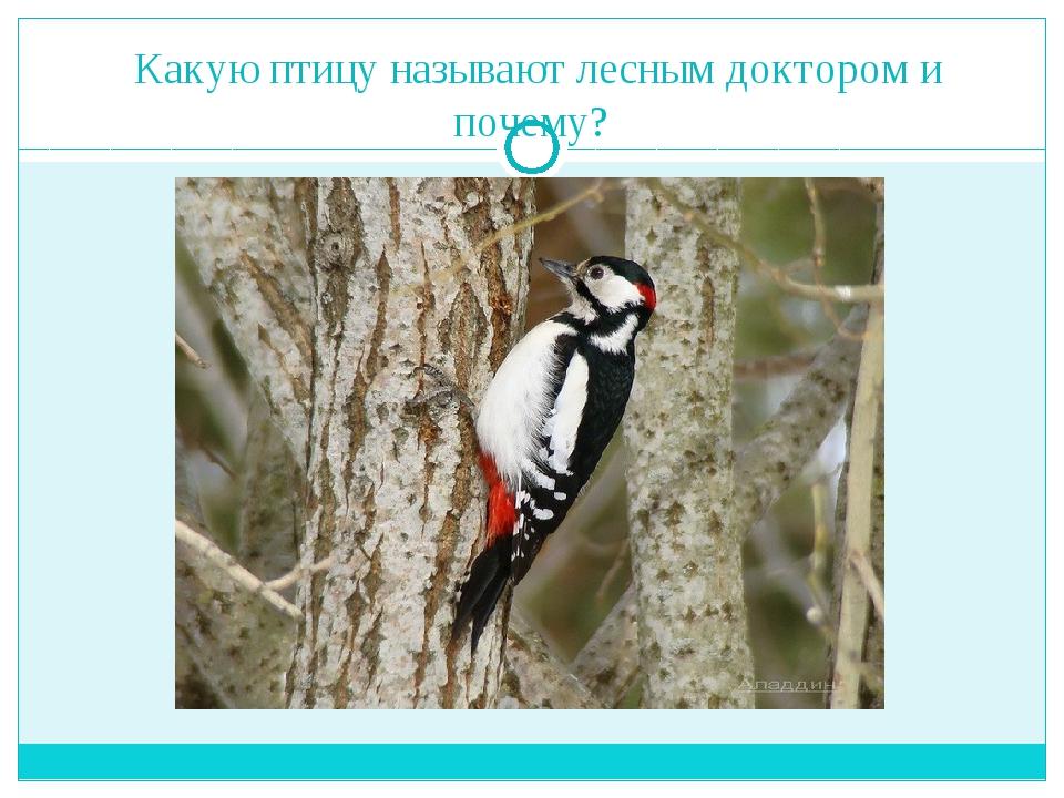 Какую птицу называют лесным доктором и почему?