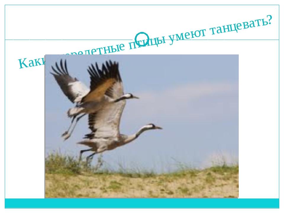 Какие перелетные птицы умеют танцевать?