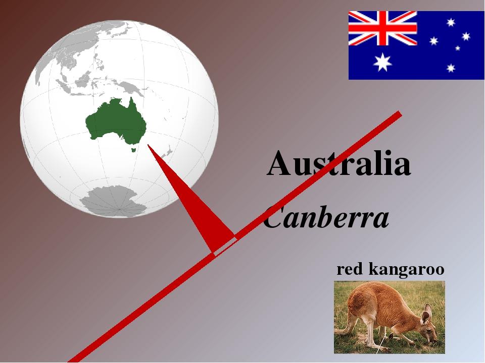 Australia Canberra red kangaroo
