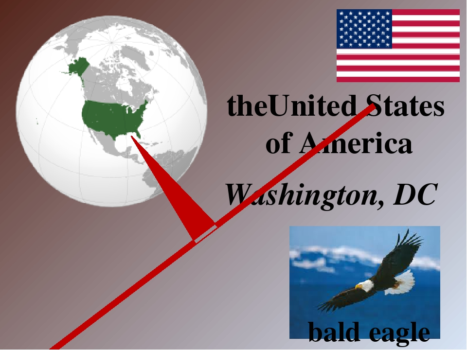 Washington, DC theUnited States of America bald eagle