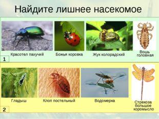 Найдите лишнее насекомое