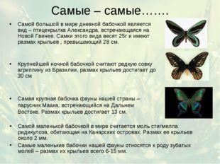 Самые – самые……. Самой маленькой бабочкой в мире считается моль стигмелла рид