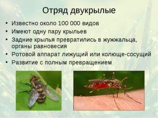 Отряд двукрылые Известно около 100 000 видов Имеют одну пару крыльев Задние к