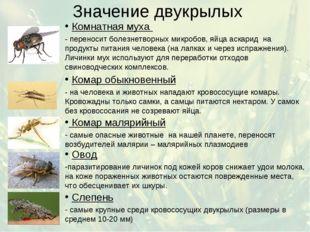 Значение двукрылых Комнатная муха - переносит болезнетворных микробов, яйца а