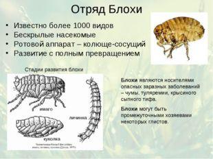 Отряд Блохи Известно более 1000 видов Бескрылые насекомые Ротовой аппарат – к