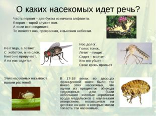 О каких насекомых идет речь? Часть первая – две буквы из начала алфавита. Вто
