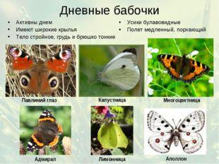 Дневные бабочки Активны днем Имеют широкие крылья Тело стройное, грудь и брюш