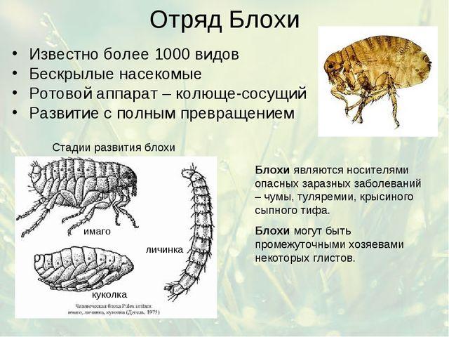 Отряд Блохи Известно более 1000 видов Бескрылые насекомые Ротовой аппарат – к...