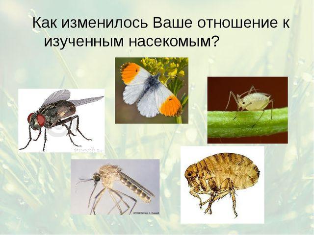 Как изменилось Ваше отношение к изученным насекомым?