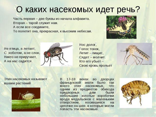 О каких насекомых идет речь? Часть первая – две буквы из начала алфавита. Вто...