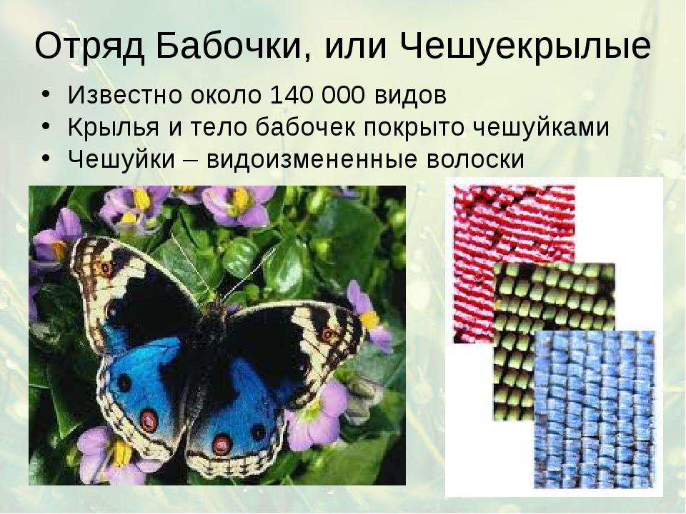 Отряд Бабочки, или Чешуекрылые Известно около 140 000 видов Крылья и тело баб...