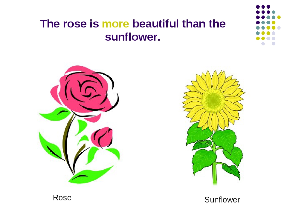 The rose is more beautiful than the sunflower. Rose Sunflower