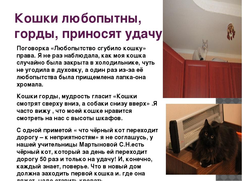 Кошки любопытны, горды, приносят удачу. Поговорка «Любопытство сгубило кошку»...