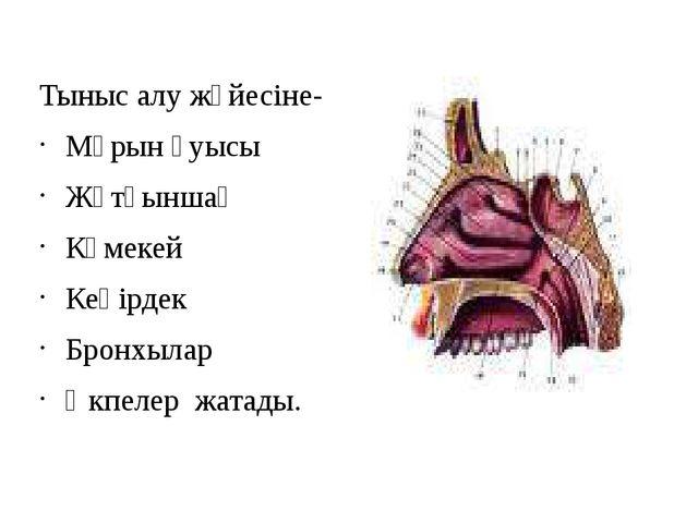 Тыныс алу жүйесіне- Мұрын қуысы Жұтқыншақ Көмекей Кеңірдек Бронхылар Өкпелер...
