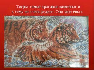 Тигры- самые красивые животные и к тому же очень редкие. Они занесены в Крас