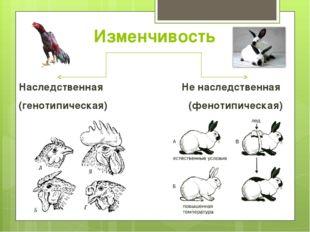Изменчивость Наследственная Не наследственная (генотипическая) (фенотипическая)