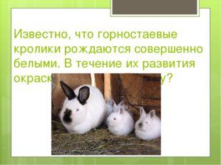 Известно, что горностаевые кролики рождаются совершенно белыми. В течение их