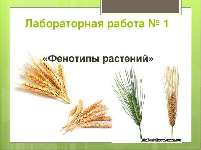 Лабораторная работа № 1 «Фенотипы растений»