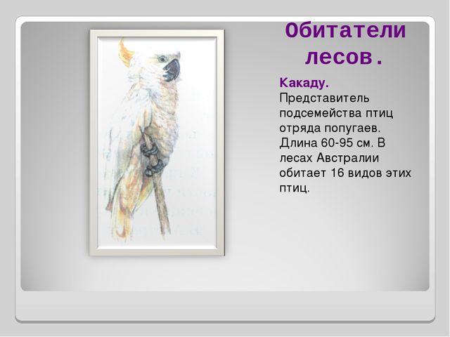 Обитатели лесов. Какаду. Представитель подсемейства птиц отряда попугаев. Дли...