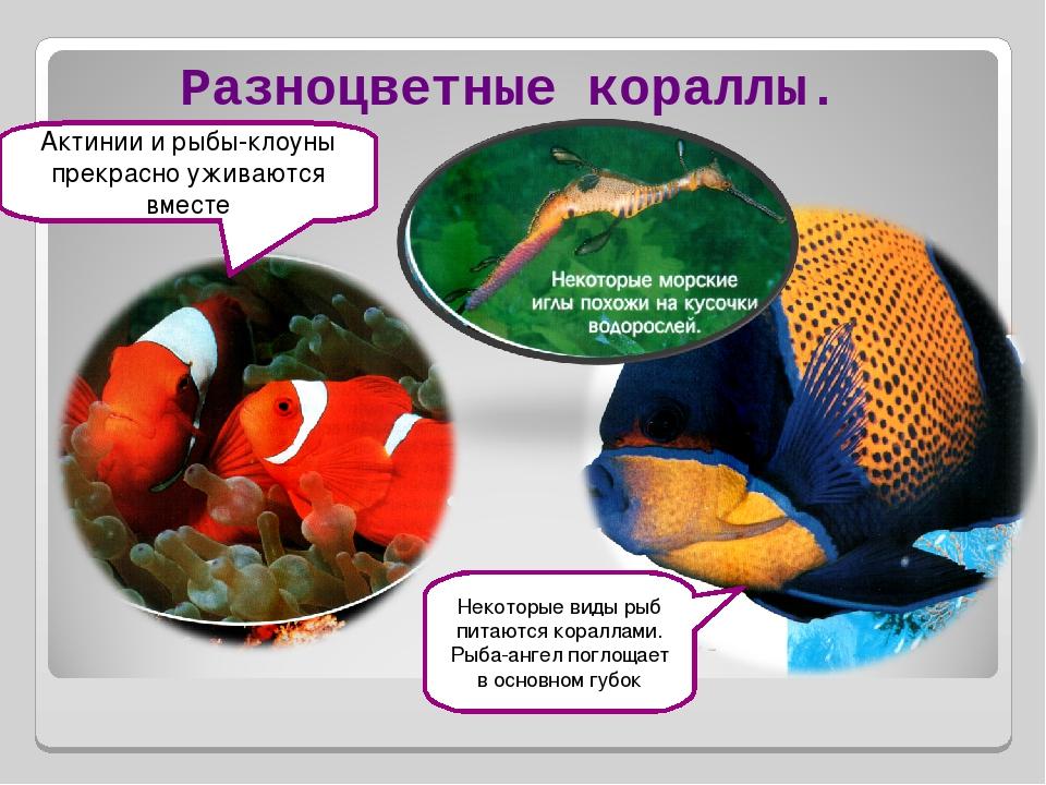 Разноцветные кораллы. Актинии и рыбы-клоуны прекрасно уживаются вместе Некото...