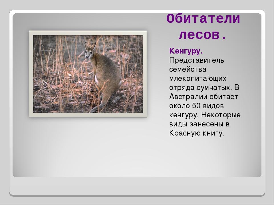 Обитатели лесов. Кенгуру. Представитель семейства млекопитающих отряда сумчат...