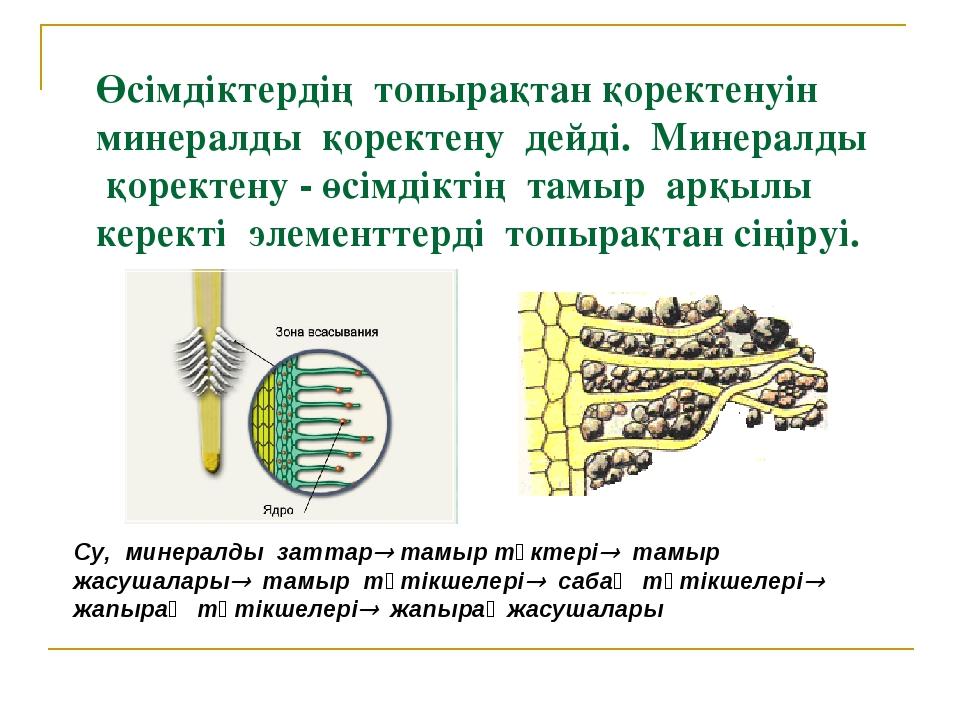 Өсімдіктердің топырақтан қоректенуін минералды қоректену дейді. Минералды қор...
