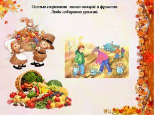 Осенью созревают много овощей и фруктов. Люди собирают урожай.